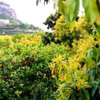 Flor de aguacate y naranjo
